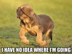 """I have no idea where I'm going."" ~ Dog Shaming shame - Hound Dog - Now you see it, Now you don't!"