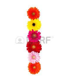 carta flor que en el fondo blanco de flores de gerbera