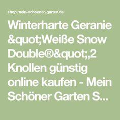 """Winterharte Geranie """"Weiße Snow Double®"""",2 Knollen günstig online kaufen - Mein Schöner Garten Shop"""