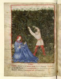 Nouvelle acquisition latine 1673, fol. 40v, Récolte de l'aneth. Tacuinum sanitatis, Milano or Pavie (Italy), 1390-1400.  Keywords: houppelande, liripipe
