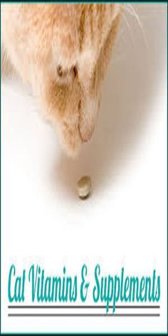 Nutritional Supplements: Does Your Cat Really Need Them Coconut Oil Cats, Human Food For Dogs, Cat Vitamins, Fisher Cat, Cat Health Care, Sick Cat, Youtube Cats, Cat Signs, Animal Nutrition
