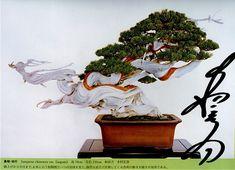 Masahiko Kimura Bonsai | 36- bonsais de Kimura