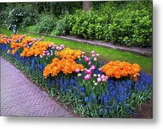 Flowerbed in Keukenhof Gardens with Orange Tulip Orca Metal Print by Jenny Rainbow. All metal prints are professionally printed, packaged, and shipped within 3 - 4 business days and delivered ready-to-hang on your wall. Choose from multiple sizes and mounting options. Cool Photos, Beautiful Pictures, Fine Art Prints, Framed Prints, Beautiful Flowers Garden, Flower Beds, Botanical Gardens, Spring Flowers, Fine Art Photography