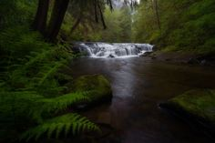 Sweet Creek Greens by Erin Tolie on 500px