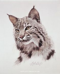 Drawn lynx man - pin to your gallery. Explore what was found for the drawn lynx man Big Cats Art, Cat Art, Wildlife Paintings, Wildlife Art, Lynx, Color Pencil Art, Cat Drawing, Animal Drawings, Pencil Drawings