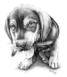 kreslené obrázky zvířat tužkou - Hledat Googlem Animal Drawings, Pencil Drawings, Amazing Drawings, Dog Portraits, Animal Pictures, Cute Animals, Psi, Dogs, Painting