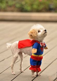 Halloween Superhero Costume - I want this costume for my maltese!