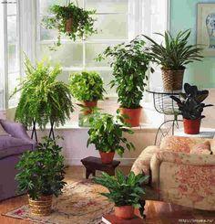 В чем нуждаются комнатные растения в конце осени!