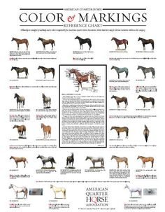 Horse colour and markings.  http://rocknrodeogirl.hubpages.com/hub/Horse-Breeds-and-Coloring