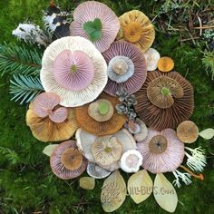"voiceofnature: ""Forget flowers: this Valentine's day give her mushrooms Amazing mushroom landart by Jill Bliss """