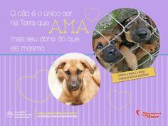 """Dia 4 de abril, Dia Mundial dos Animais de Rua!!    """"O cão é o único ser na…"""