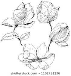 Similar Images, Stock Photos & Vectors of Magnolia in a vector style isolated. Full name of the plant: magnolia. Vector flower for background, texture, wrapper pattern, frame or border. Bullet Journal School, Designs To Draw, Tattoo Drawings, Stencils, Royalty Free Stock Photos, Sketches, Magnolias, Quilling, Illustration