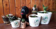#diy #cactus #aloe #vera #room