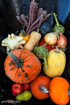 Fall garden Harvest of Pumpkins artichoke squash carrot #gardentherapy #vegetablegarden