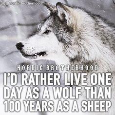 #heathenlife #likeaviking #valhalla #vikings #wolf #wolfpack #nordicbrotherhood