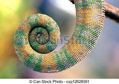 kameleon staart - Google zoeken