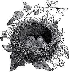 Antique-Bird-Nest-Illustration-GraphicsFairy.jpg (JPEG-afbeelding, 1713×1800 pixels) - Geschaald (38%)