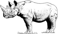 New Coloring Pages Rhino Free - Coloring Pages For Free Free Coloring Pages, Coloring Books, Colouring, Animal Jam, Pictures Online, Rhinoceros, Moose Art, Wildlife, Cartoon