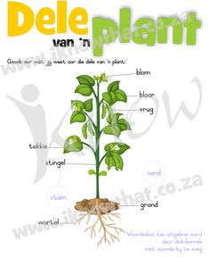Brei woordeskat uit met 'n dink-borrelkaart. Afrikaans, Textbook, Homeschool, Herbs, Teacher, Education, Plants, Professor, Teachers
