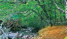 El Hayedo de Montejo de la Sierra (Madrid): El bosque de los duendes