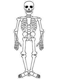 Resultado De Imagen Para Esqueleto Humano Para Dibujar Esqueleto