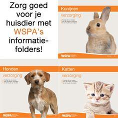 Huisdieren vereisen veel aandacht en goede zorg. WSPA heeft daarom informatiefolders gemaakt voor (toekomstige) huisdiereigenaren. Hierin vind je alles wat je moet weten om goed voor je hond, kat of konijn te kunnen zorgen.