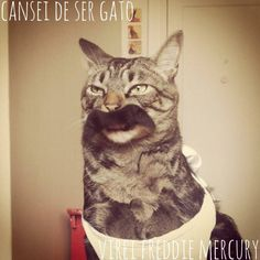 5 bichos de estimação que pararam a internet - Cansei de ser gato homenageando Freddie Mercury