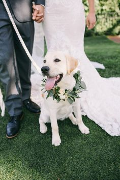 Dog Floral Collar Wedding Jaimee Morse Photography # Dogs in weddings CP Couple: Alex + Larry — Champagne Press Floral Wedding, Wedding Flowers, Dog Supplies, Cute Baby Animals, Wedding Pictures, Cute Dogs, Dream Wedding, Spring Wedding, Dogs At Wedding