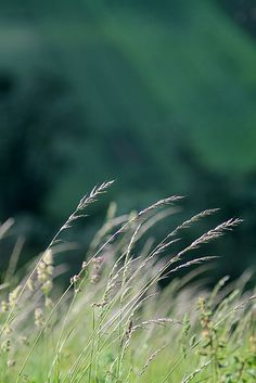 meadow | Flickr - Photo Sharing!