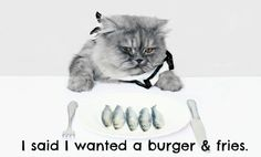 Cats resist healthy foods http://slimkitty.com/3-reasons-cats-resist-switching-to-healthy-food