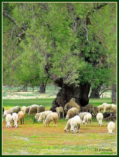 Malpartida de Plasencia,Extremadura