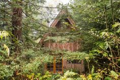 Tiny Zen Cabin in the Forest 0014
