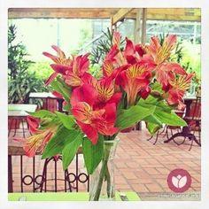 Nossas flores vistas pelos olhos dos nossos visitantes parecem ainda mais lindas! As fotos foram compartilhadas no Pinpic.