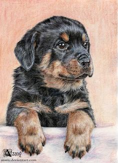 Rottweiler puppy by Azany.deviantart.com