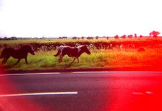 Runaway Horses.  © Chris Trew / Plastic Cameras 2012