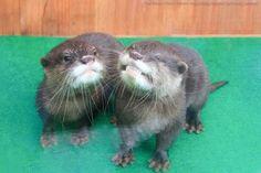 37 самых милых детенышей животных 2014 года