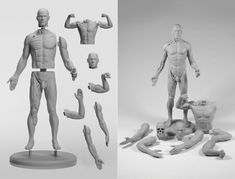 Different components of the adaptable male figure, including torso, arm and skull sculpts