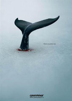 Anti Whaling Campaign Ad | advertising. Werbung. publicité | Ad: Greenpeace | Design: Giorgi Popiashvili |