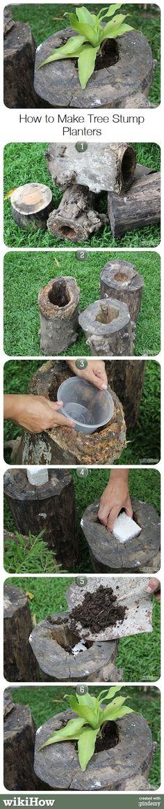 Como plantar em um tronco.