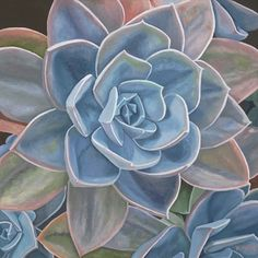 My cup runniest over II by Robin McCoy Oil ~ 24 x 24 Watercolor Sketchbook, Watercolor Cactus, Wine And Paint Night, Protea Art, Succulents Drawing, Strange Flowers, Diy Wall Painting, Arte Floral, Leaf Art