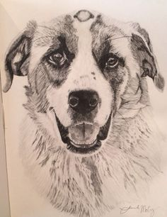 Drawing of a dog I was hired to do in pencil.