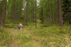 In der Natur unterwegs: Vier Täler, drei Pässe im Locarnese - Wieder ein einsamer Wanderweg - #ExpeditionLocarnese
