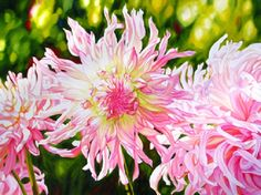 Sheryl Sawchuck is a Chemainus artist who does incredible floral images.