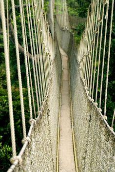 "This was an amazing trip 2010 "" Kakum National Park, Ghana """
