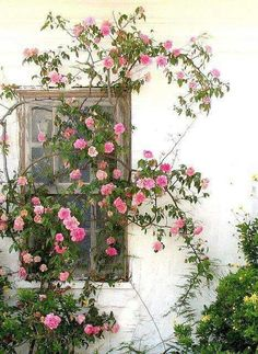 Rose Covered Window