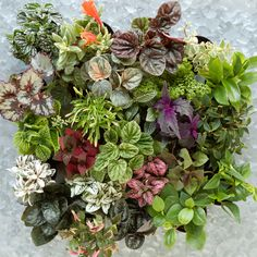 Terrarium Plant Collection, Hanging in Gifts The Gift Guide The Gardener New Enthusiast at Terrain