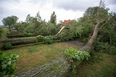 Haarlems Dagblad - Zeven bomen op een rij tegelijk gesneuveld in Haarlem