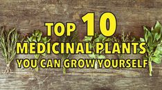 Growing Your Own Medicine: TOP 10 MEDICINAL PLANTS YOU CAN GROW YOURSELF