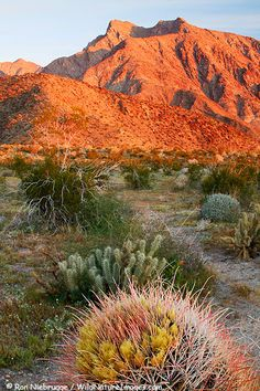 Anza-Borrego Desert- home. Geoff and I have been here so many times. It's where I fell in love with him!