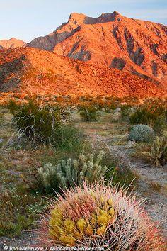 Anza-Borrego Desert State Park, Eastern San Diego County, CA